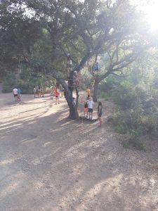 Circuito arbóreo