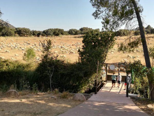campamento verano- entrada